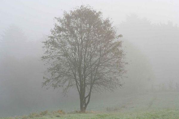 Morgens im Nebel 1