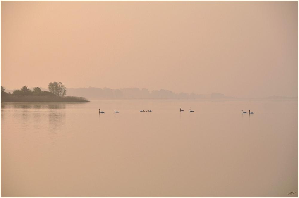 Morgens im Nebel...