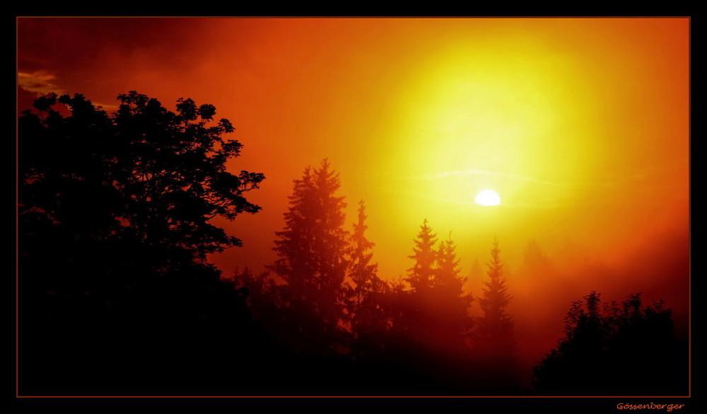 Morgen´s im Nebelwald
