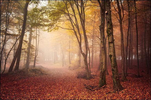 Morgens im Nebelwald