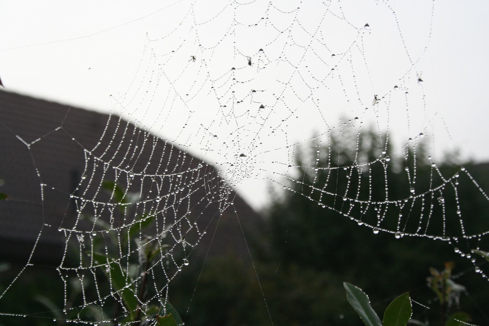 Morgens im Netz