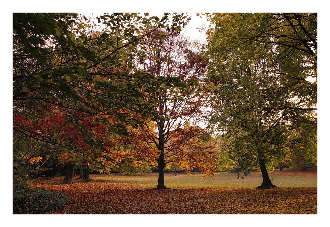 Morgens im Park
