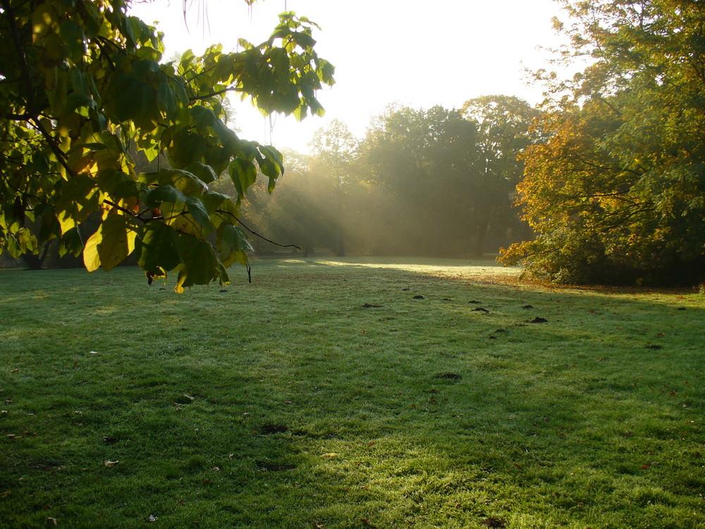 """""""Morgens"""" im Park"""