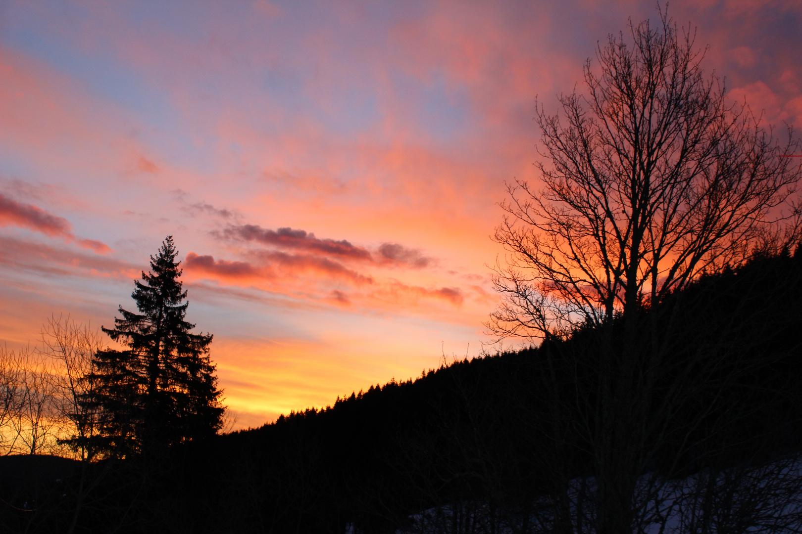 Morgens im Schwarzwald...