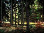 Morgens im Tharandter Wald (Reload)