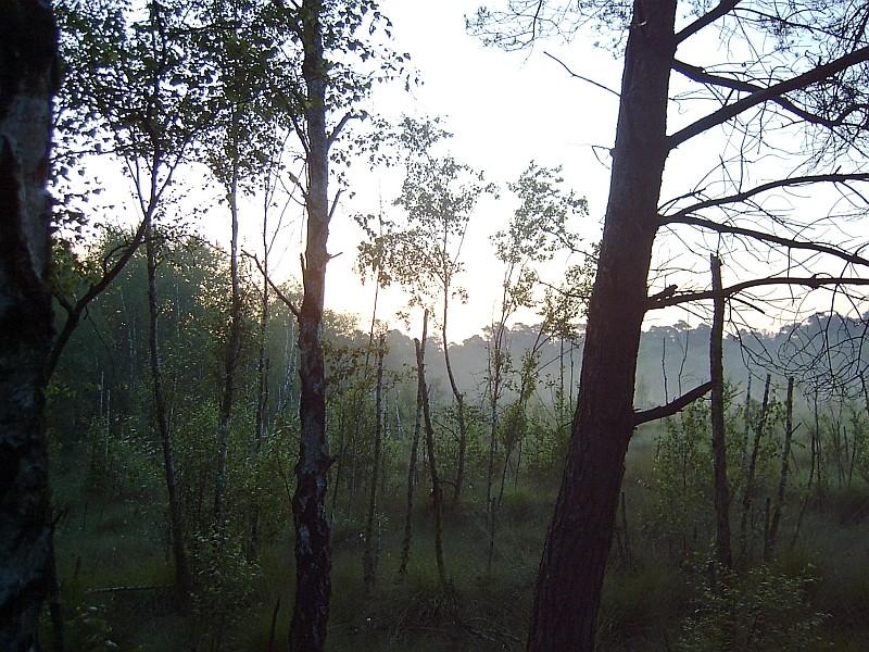 Morgens im Venner Moor bei Münster
