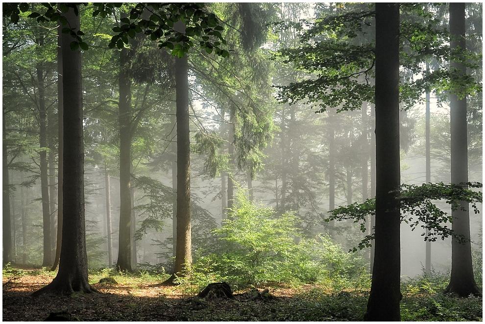 Morgens im Wald_2