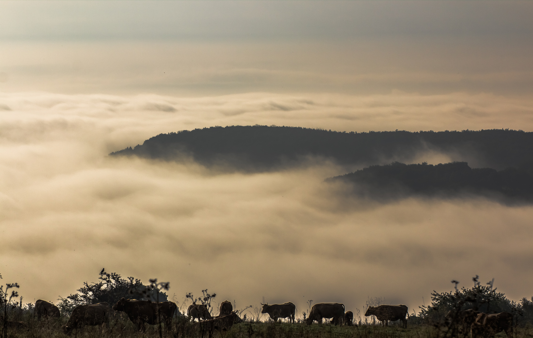 Morgens im Westerwald