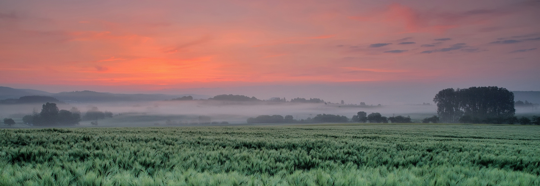 *morgens im Wittlicher Tal V*