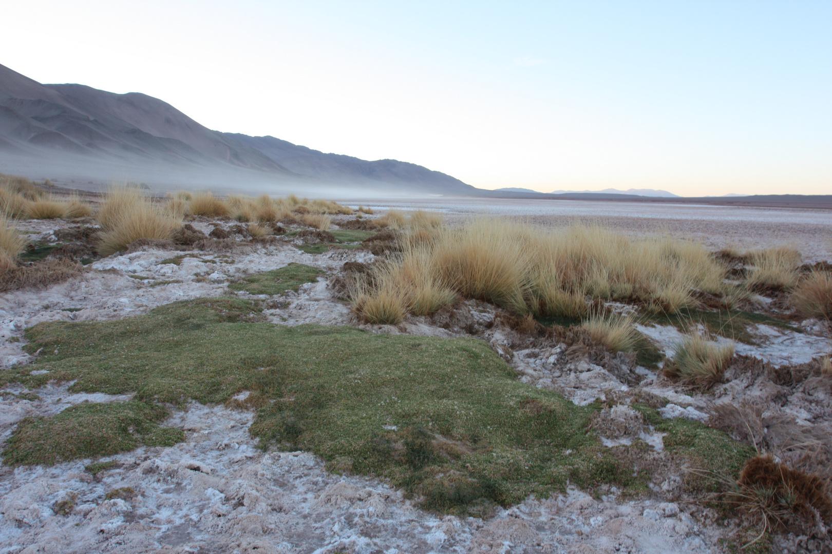 Morgens in der Puna (Andenhochebene in Argentinien)
