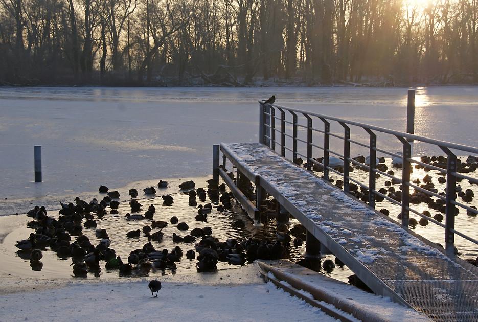 Morgens in Kladow, 08.01.09 – 05