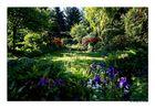 Morgens in unserem Garten...........