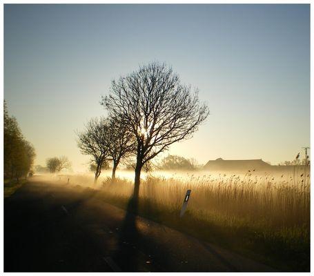 Morgens in Westermarsch.......