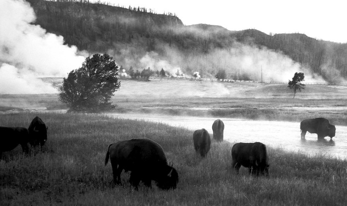Morgens in Yellowstone