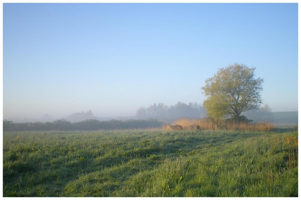 Morgens ist der schönste Tag.