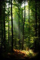 Morgens - Lichtung im Wald