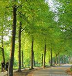 Morgens um 7 ist die Welt noch in Ordnung  (Promenade in Münster)