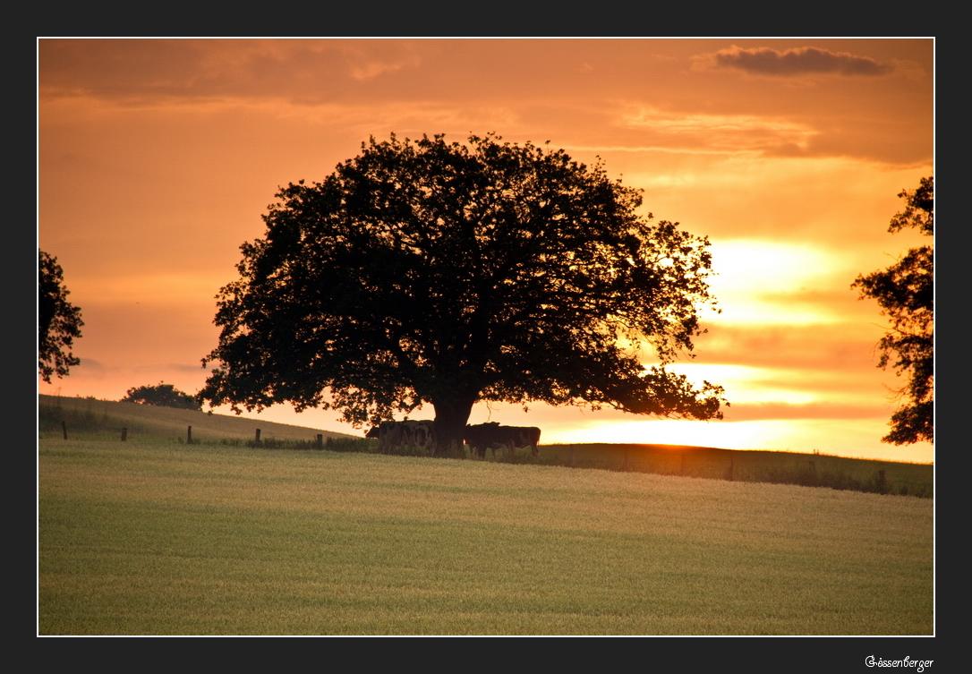 Morgen´s unterm Baum