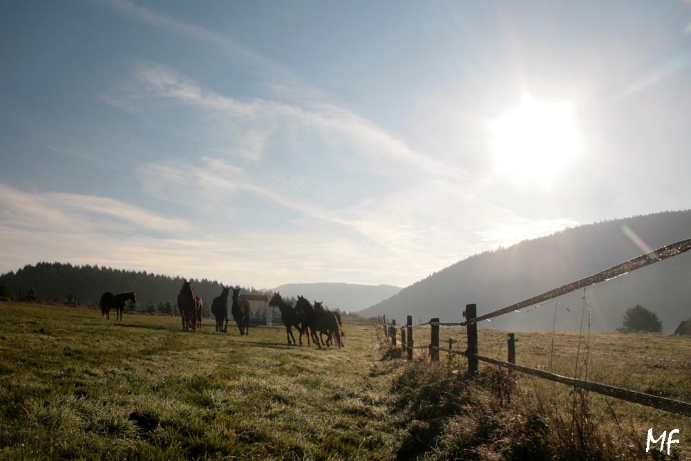 Morgensfrüh auf der Pferdeweide