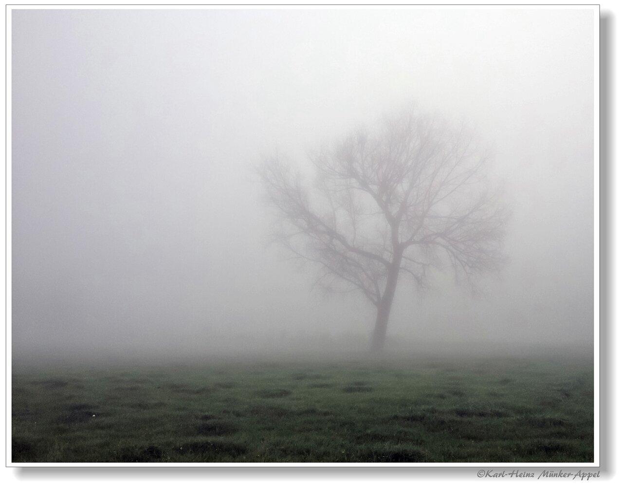 Morgensfrüh, wenn der Tag beginnt und der Nebel noch den Weg verdeckt...