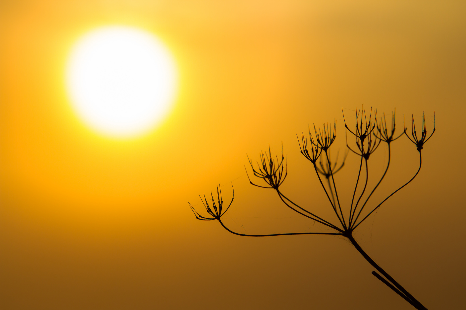 ~ Morgensonne ~