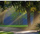 Morgensonne im Schloßpark, Husum