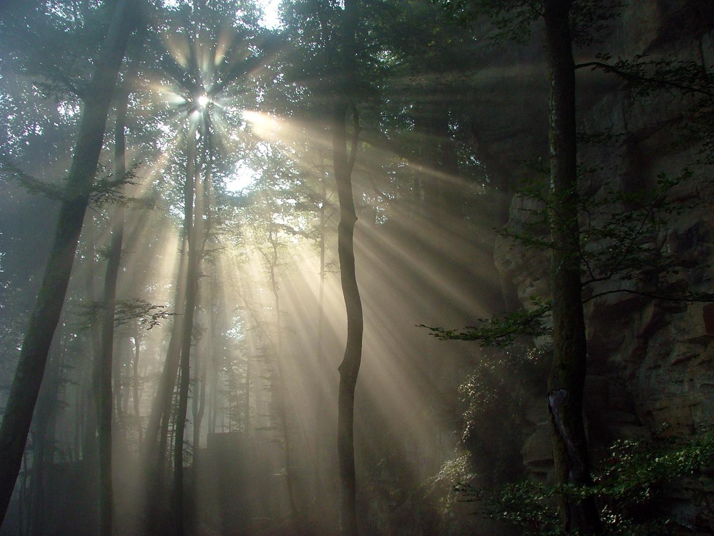 Morgensonne im Urwald