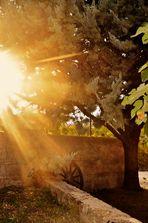 Morgensonne in ländlicher Umgebung....