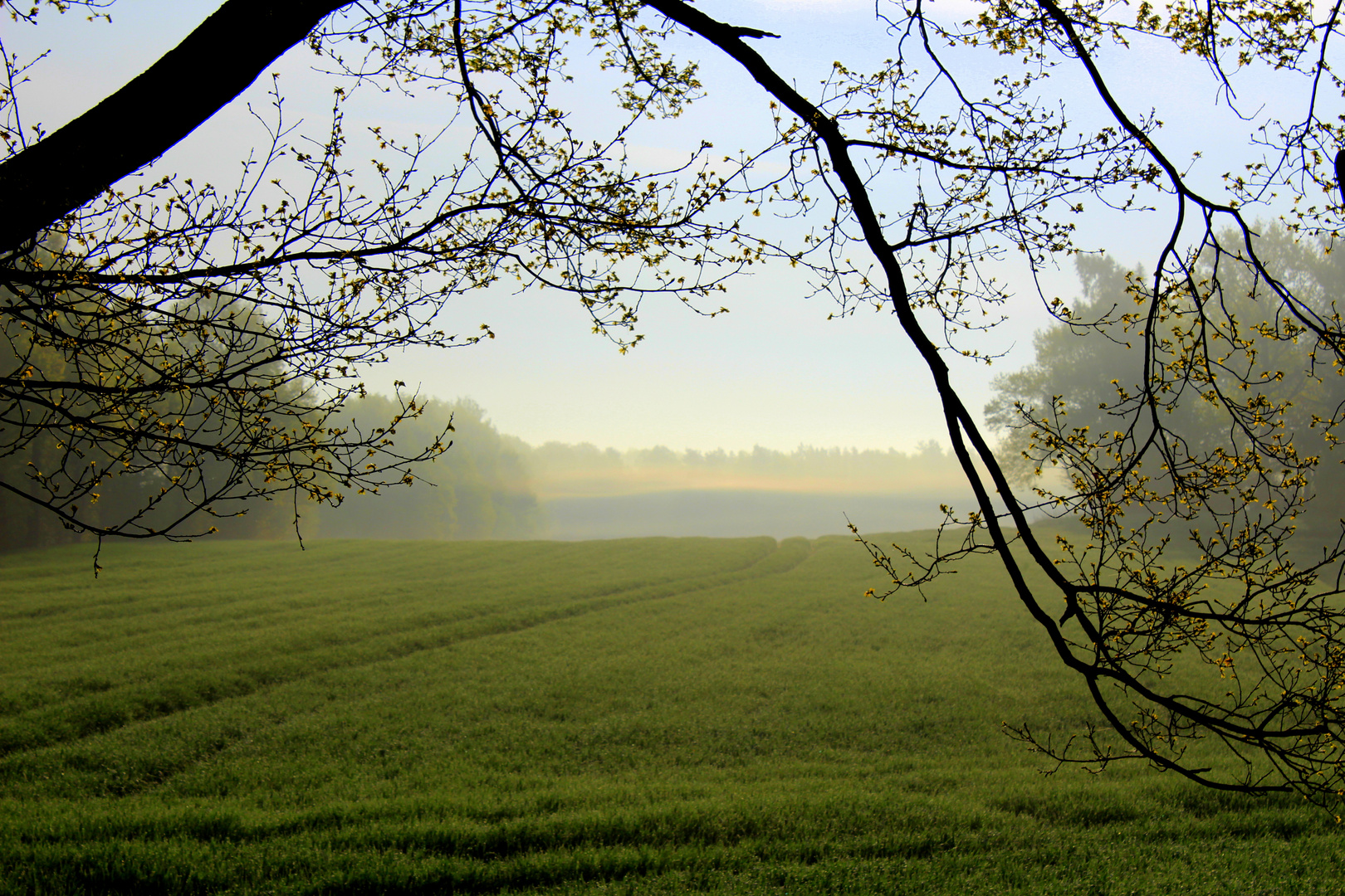 Morgensonne kämpft gegen Morgennebel