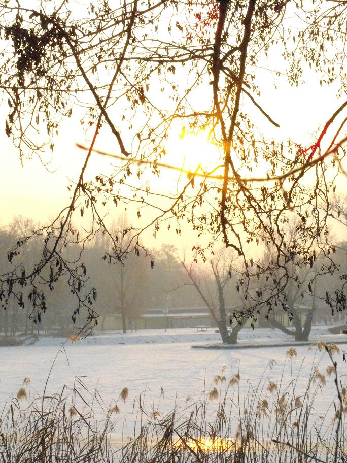 Morgensonne VIII