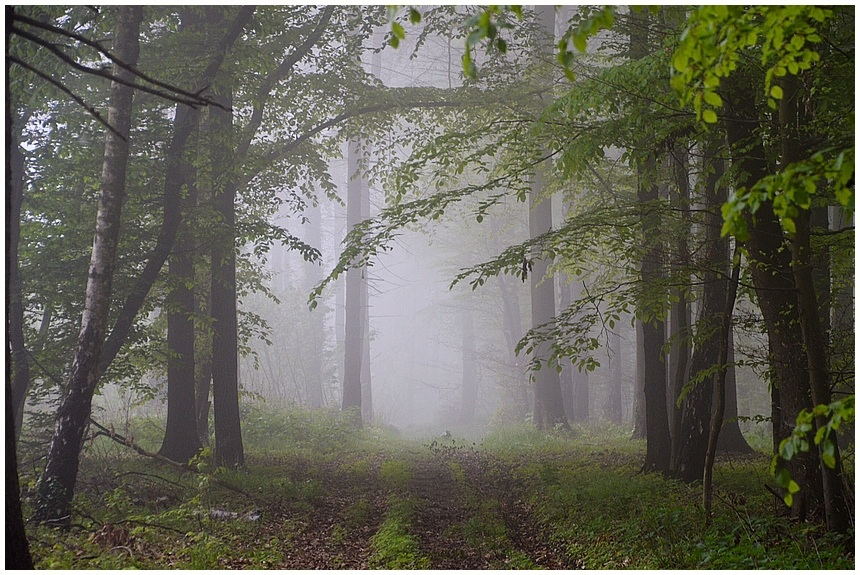 Morgenspaziergang im Wald - Osnabrücker Land - Zuhause