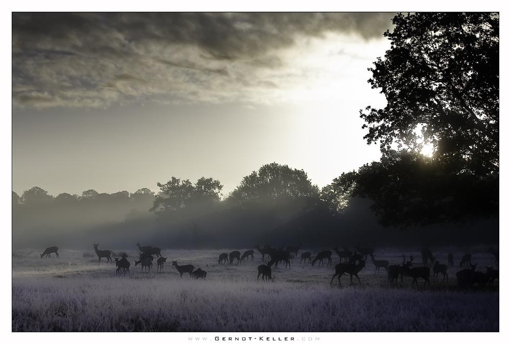 Morgens.Richmond.Park