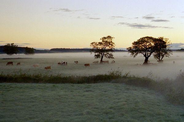 Morgenstimmumg