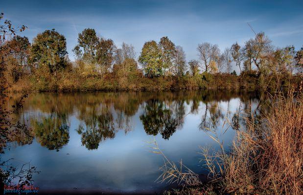 Morgenstimmung am Alten Rhein