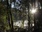 Morgenstimmung am Lake Matheson (Neuseeland)