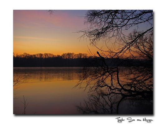 Morgenstimmung am Tegeler See