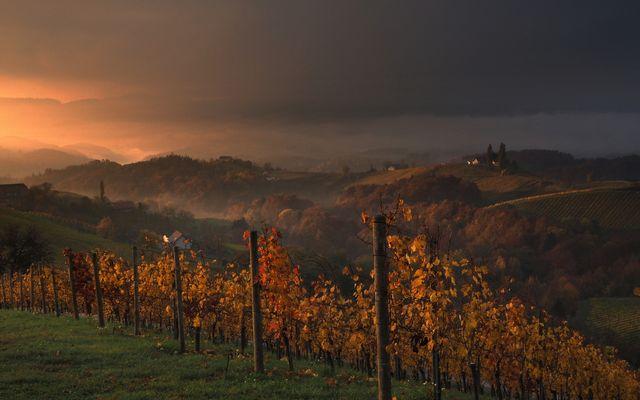Morgenstimmung an der Weinstrasse