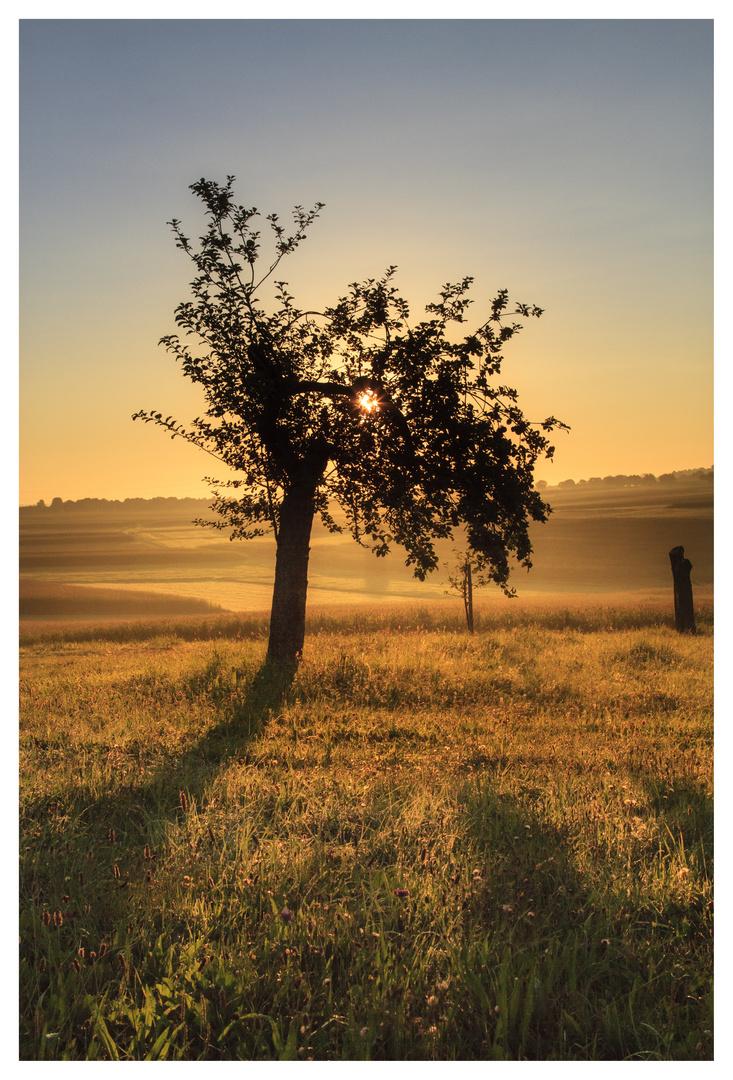 Morgenstimmung - Der Sommer geht vorüber