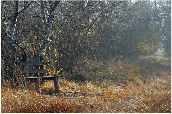 Morgenstimmung im Ahrensfelder Moor, Osterholz-Scharmbeck