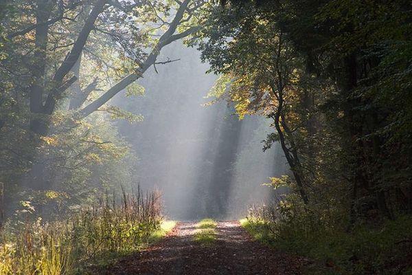Morgenstimmung im Bramwald
