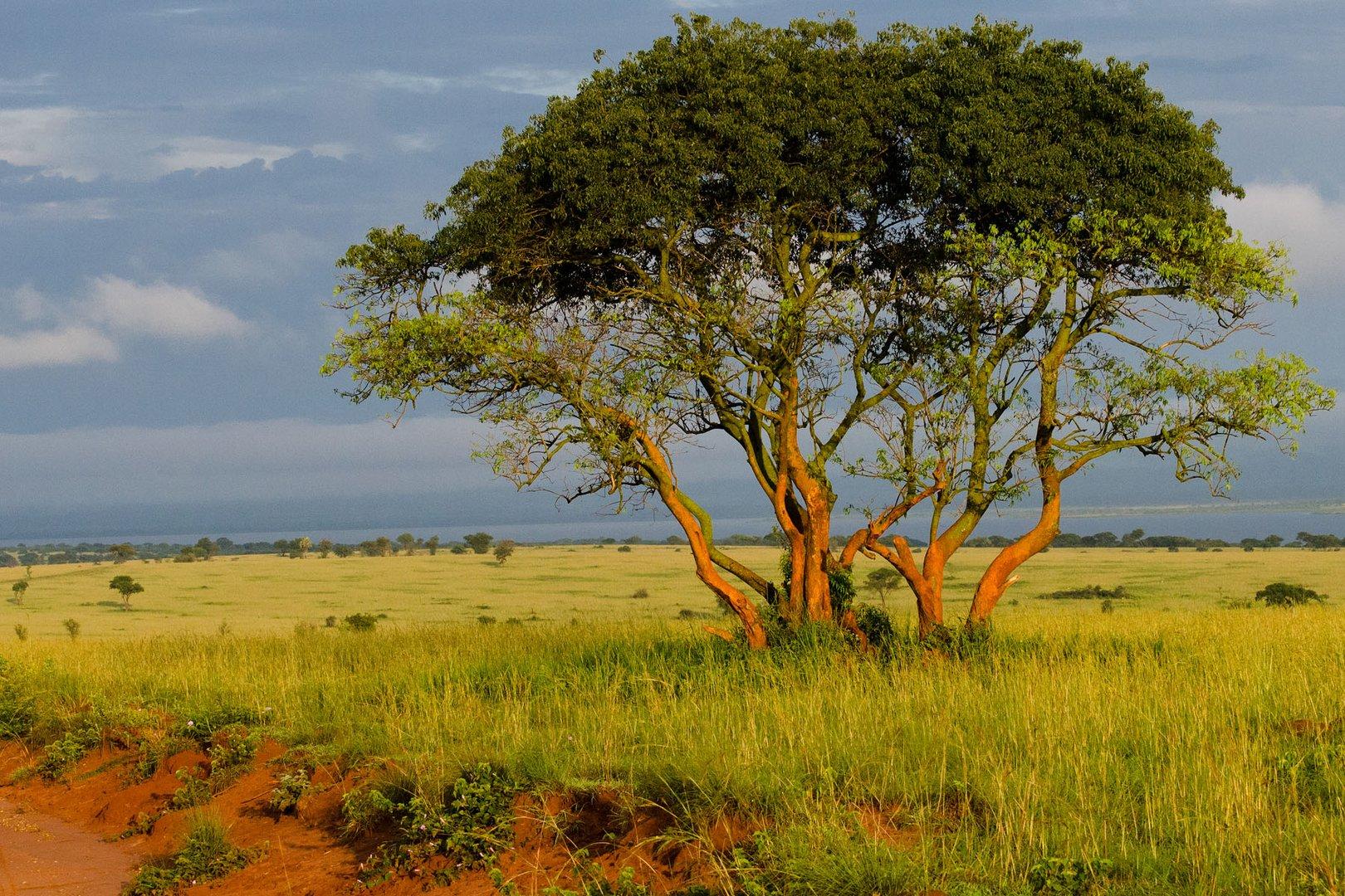 Morgenstimmung im Murchison Falls National Park (1)