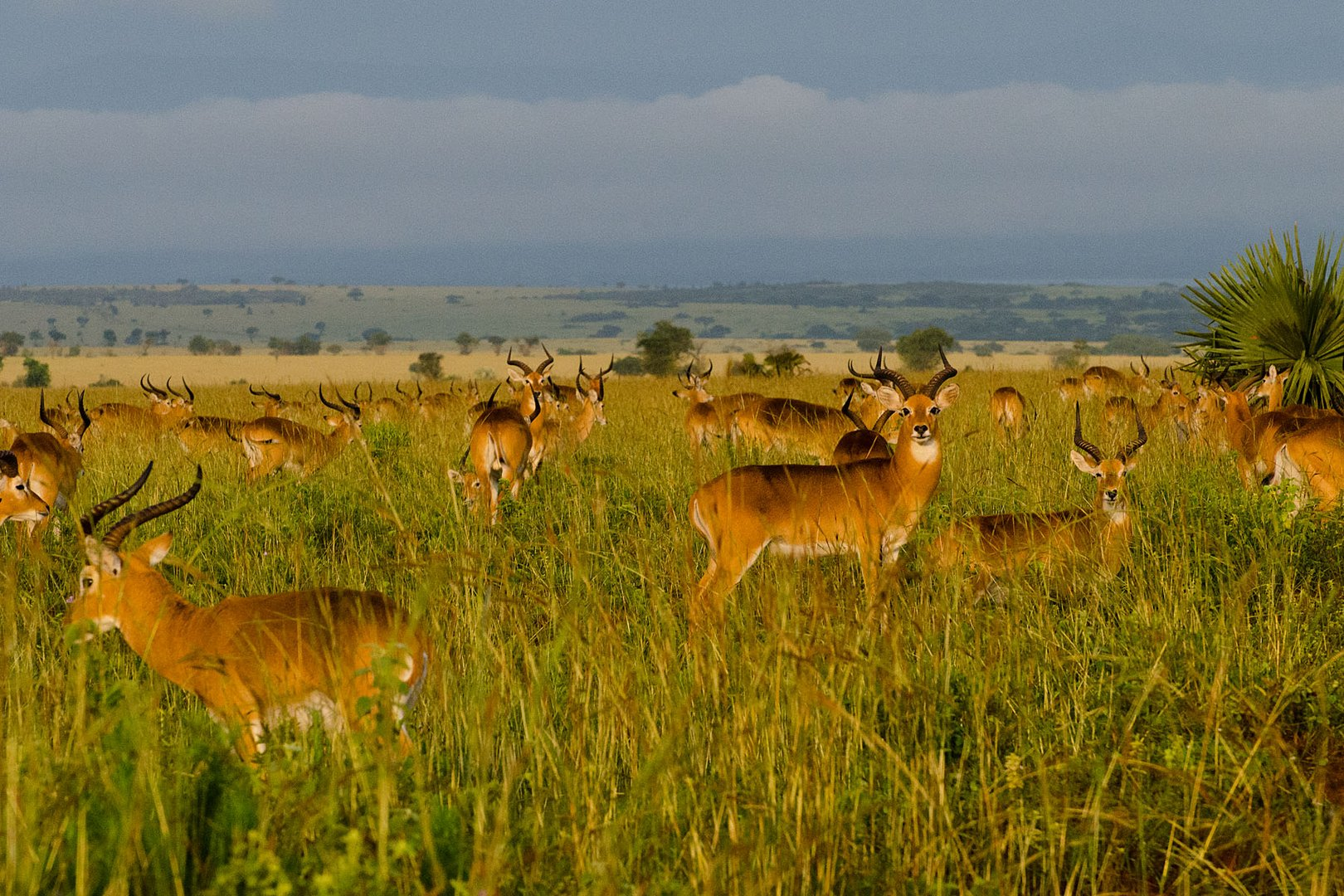 Morgenstimmung im Murchison Falls National Park (2)