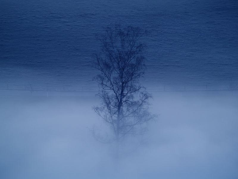 Morgenstimmung im Nebel