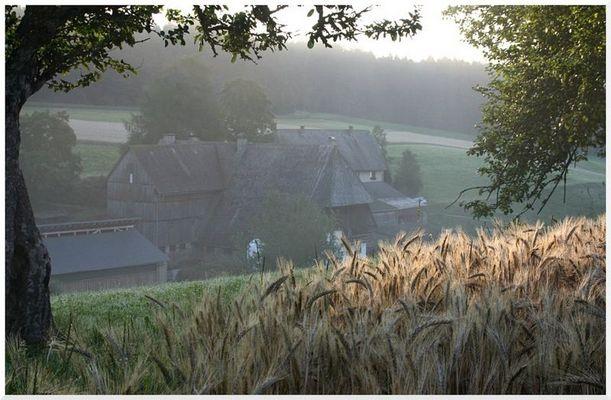 Morgenstimmung irgendwo im Schwarzwald