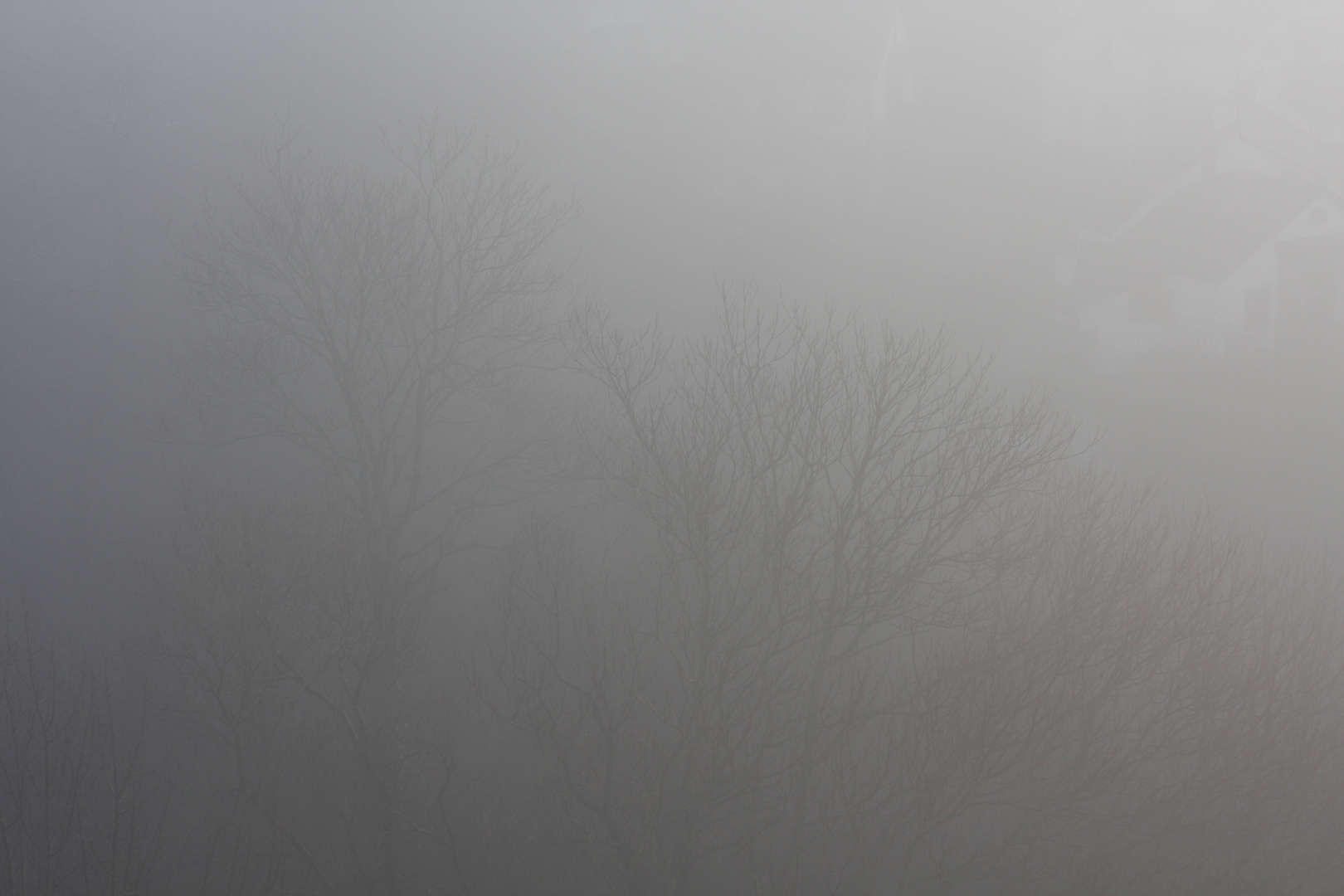 Morgenstimmung mit Nebel