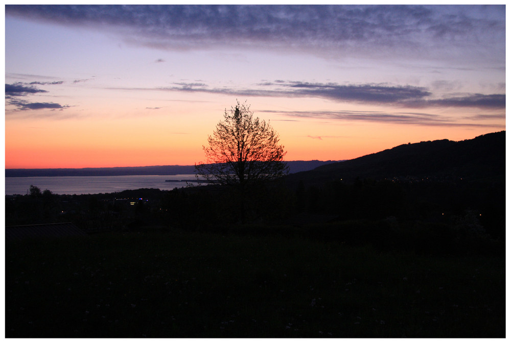 morgenstimmung über dem Bodensee