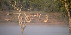 Morgenstund am Sable Dam