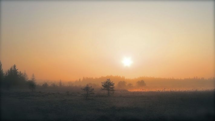 Morgenstunde im Moor 1