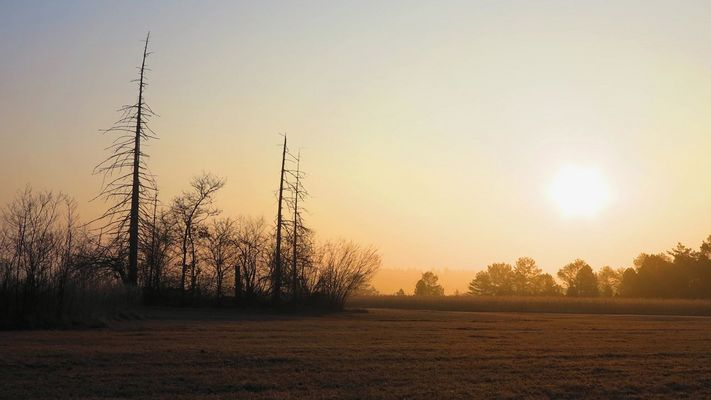 Morgenstunde im Moor 2