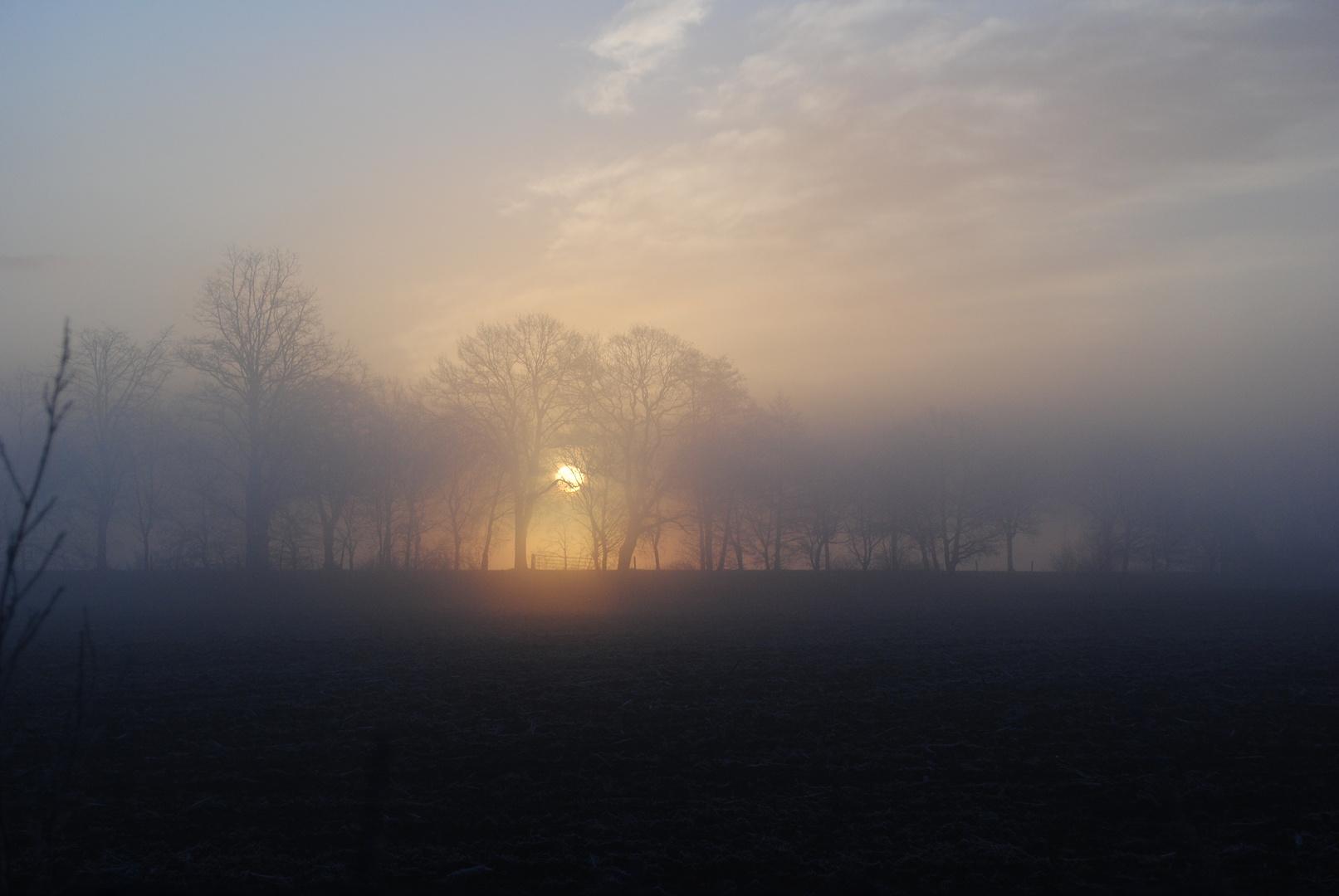 Morgenstunde im Teufelsmoor